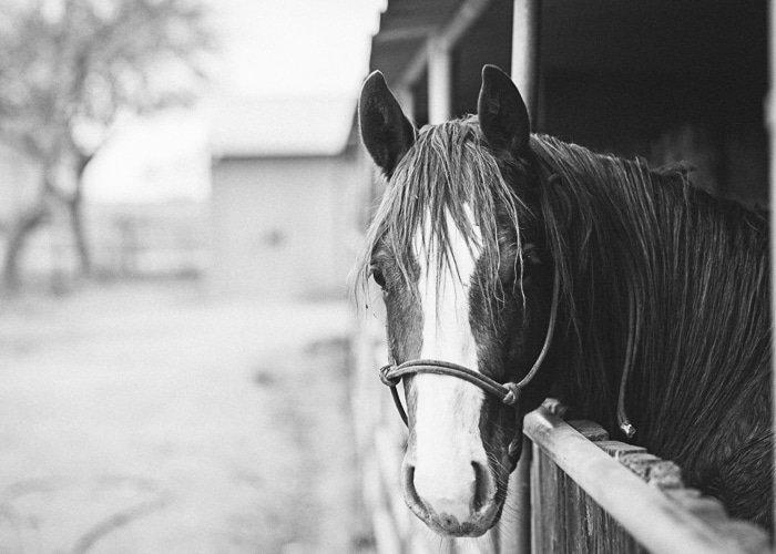 Great Hobbies For Him Horseback Riding